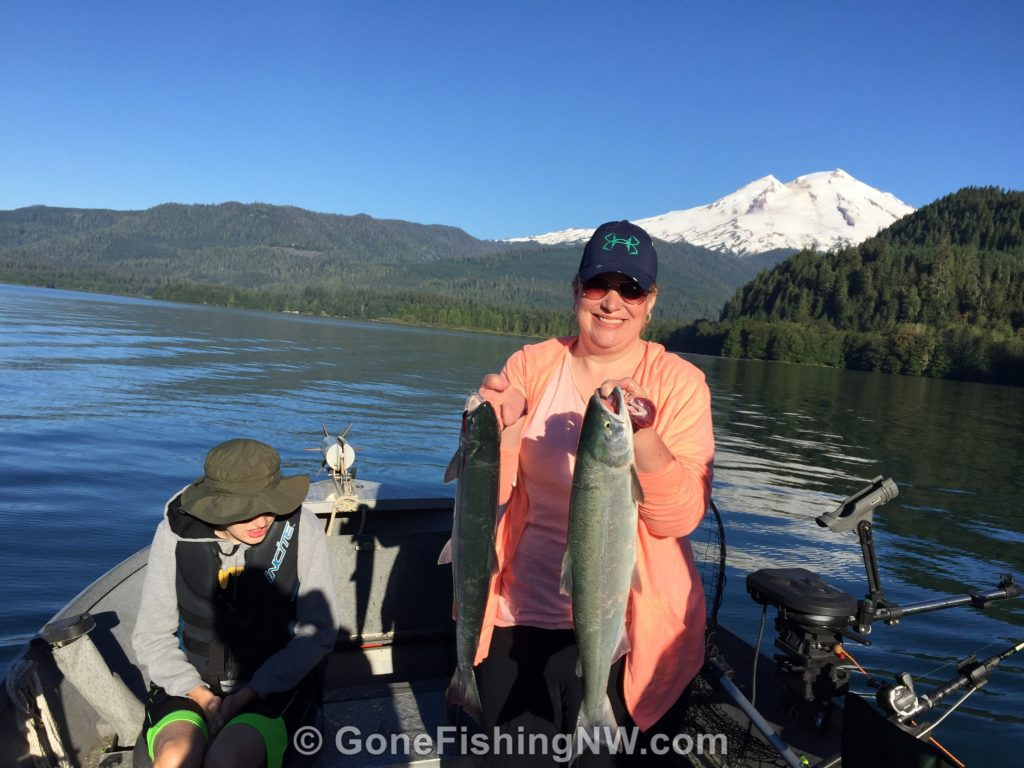 Transfer your sockeye salmon to the cooler after bleeding them